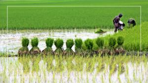বাংলাদেশকে এগিয়ে নিয়েছে কৃষি, গ্রাম–শহরের যোগাযোগ